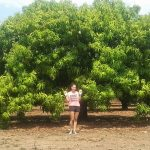 A mango a day…