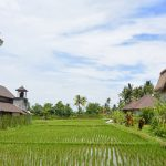 Terug naar Bali