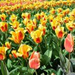 10x Tips voor een weekendje weg in Nederland