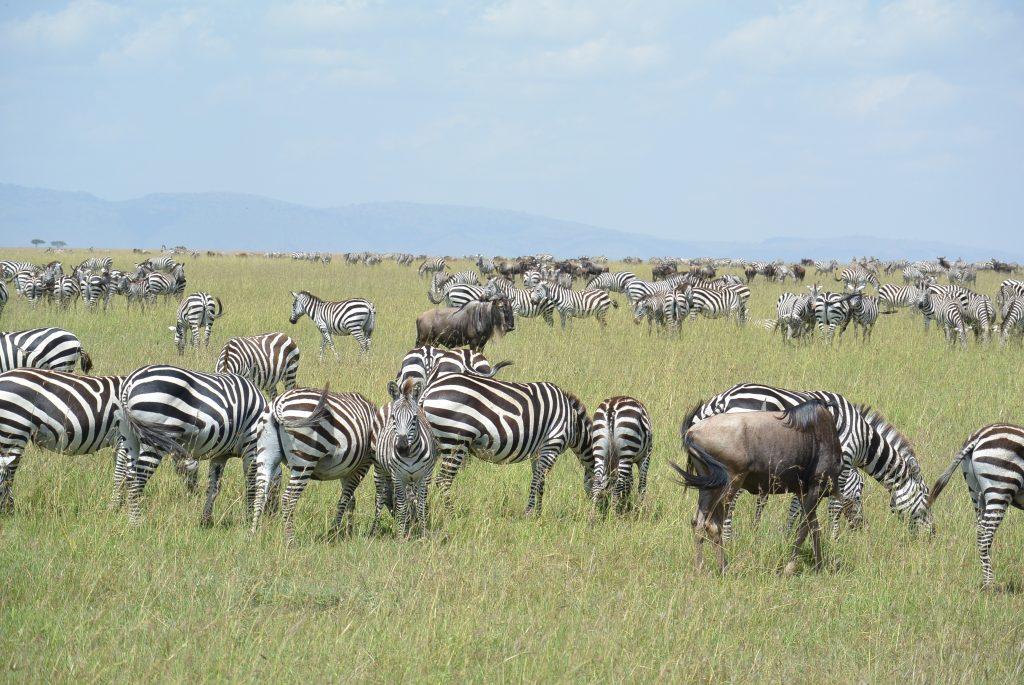Ik ging wel spontaan naar Kenia!